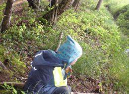 Auf einem Waldspaziergang erforschten wir die Natur